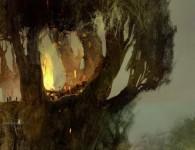 arcania_tree_big
